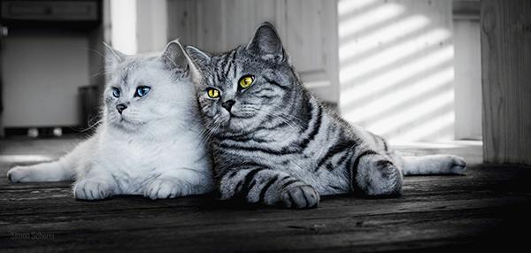Стерилизация и кастрация у котов и кошек